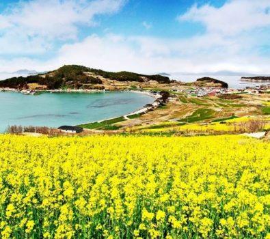 10 Tempat Wisata Favorit di Korea Selatan Wajib Anda Kunjungi
